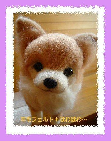 チワワちゃんベージュ5