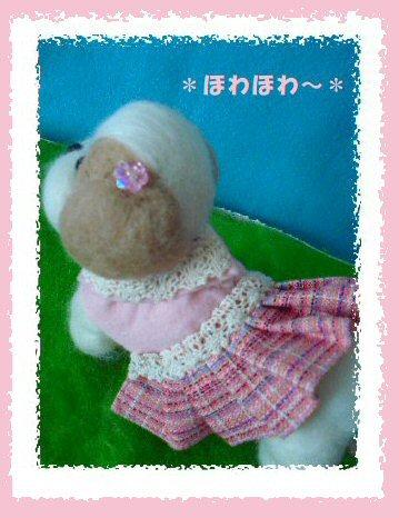 シーズー女の子2